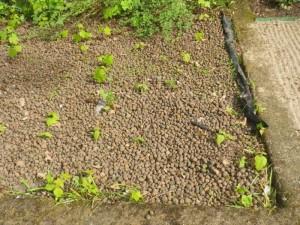 Kergkruusaga kaetud hauaplats on umbrohtunud