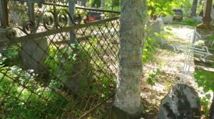 puu kasvab raudaeda sisse