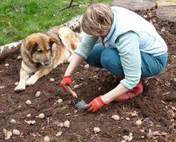 pruuniga kartulit 11.05.14