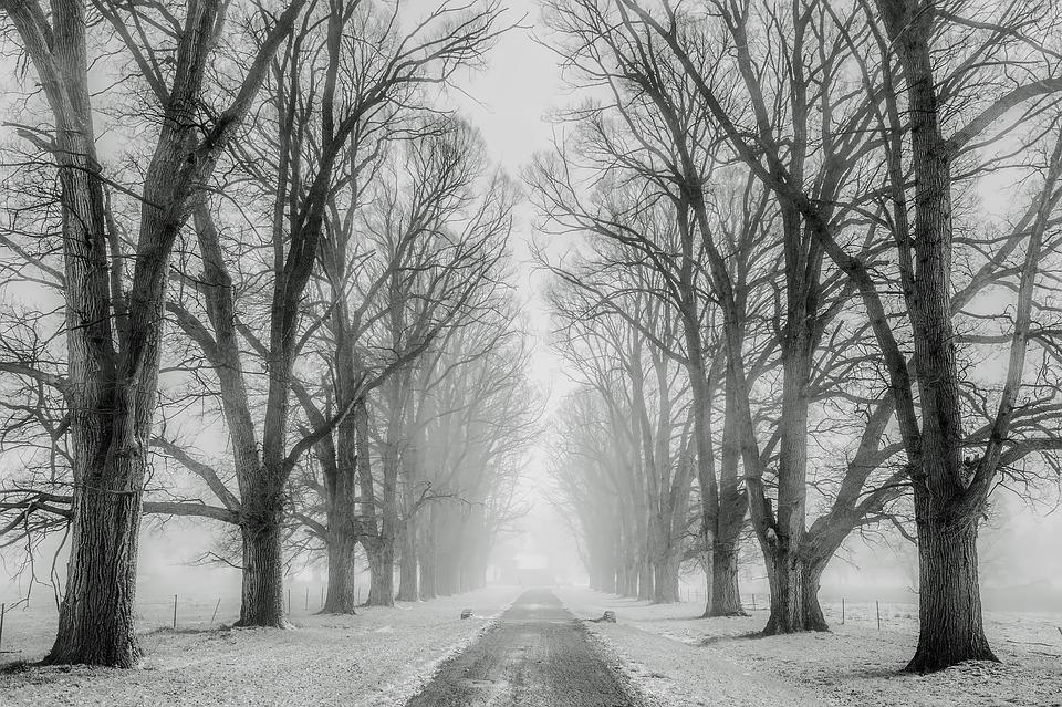 puu talvel